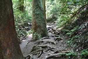 6号路はずっと森の中を通ります